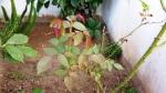 plantas-5
